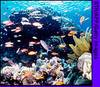 051025_coralreef_top