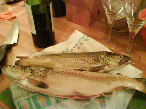 Spottedtrout